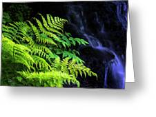 Trailside Plants Greeting Card