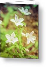 Tranquil Carolina Spring Beauty Greeting Card