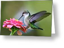Tranquil Joy Hummingbird Square Greeting Card