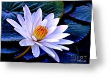 Tranquil Lily Greeting Card