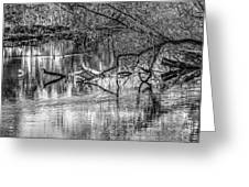 Tranquil May 2016 Bw Greeting Card