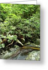 Tranquil Mountain Laurel Stream In The Great Smoky Mountains National Park Greeting Card