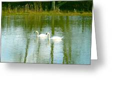 Tranquil Reflection Swans Greeting Card