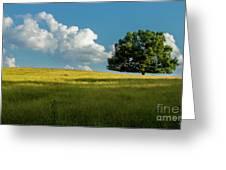 Tranquil Solitude Billowing Clouds Oak Tree Field Art Greeting Card