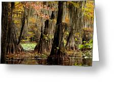 Tranquility In The Cyoress Forest Greeting Card