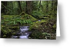 Tranquility In The Forest Greeting Card