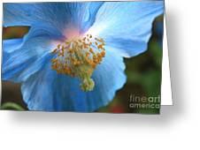 Translucent Blue Poppy Greeting Card by Carol Groenen