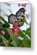 Translucent Butterfly Greeting Card
