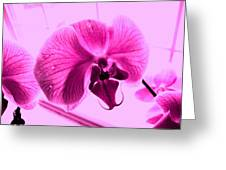 Translucent Purple Petals Greeting Card