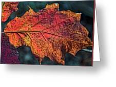 Translucent Red Oak Leaf Study Greeting Card