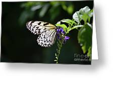 Translucent Wings On A Rice Paper Butterfly Greeting Card