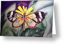 Transparent Butterfly Greeting Card