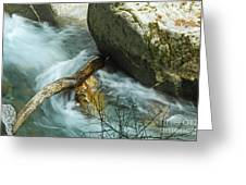 Trapped River Log Greeting Card