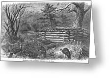 Trapping Wild Turkeys, 1868 Greeting Card