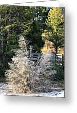 Travertine Tree Greeting Card
