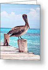 Treasure Coast Pelican Pier Seascape C1 Greeting Card