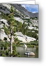 Treasure Lake Pine Greeting Card