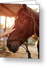 Treating From Depression With The Help Of A Horse Greeting Card