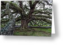 Treaty Oak 12 14 2015 027 Greeting Card