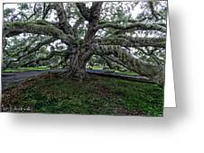 Treaty Oak 12 14 2015 028 Greeting Card
