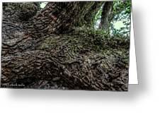 Treaty Oak 12 14 2015 042 Greeting Card