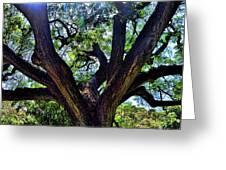 Tree 105 Greeting Card
