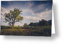 Tree 23 Greeting Card