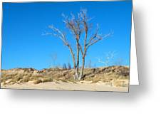 Tree And A Dune Greeting Card