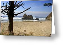 Tree And Ocean Greeting Card