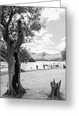 Tree And People By The Lake Greeting Card