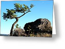 Tree And Rock Greeting Card
