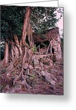Tree And Ruins In Cozumel Greeting Card