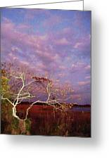 Tree And Sky At Cape May Point State Park  Nj Greeting Card