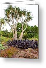 Tree And Succulents In Huntington Desert Gardens In San Marino-california Greeting Card