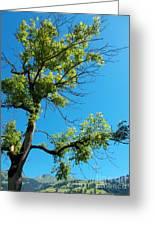 Tree Art 1 Greeting Card
