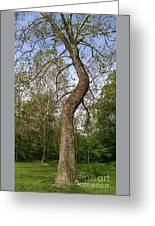 Tree At Botanical Gardens Greeting Card