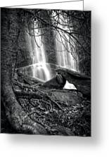 Tree At Falls In Black And White Greeting Card