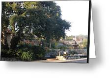 Tree At Mission Carmel Greeting Card