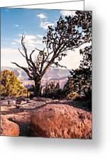 Tree At Moran Point Greeting Card