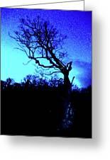 Tree At Night Greeting Card