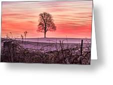 Tree At Sunrise Eaton Rapids Greeting Card