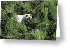 Tree Bandit Greeting Card