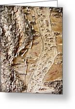 Tree Bark 9 Greeting Card
