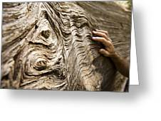 Tree Bark And Hand Greeting Card