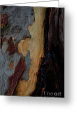 Tree Bark Collection # 52 Greeting Card