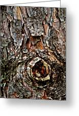 Tree Bark With Knothole Greeting Card