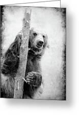 Tree Bear Greeting Card