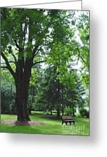 Tree Bench Greeting Card
