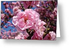 Tree Blossoming Pink Spring Blue Sky Baslee Troutman Greeting Card