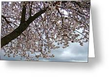 Tree Blossoms Landscape 11 Spring Blossoms Art Prints Giclee Sky Storm Clouds Greeting Card